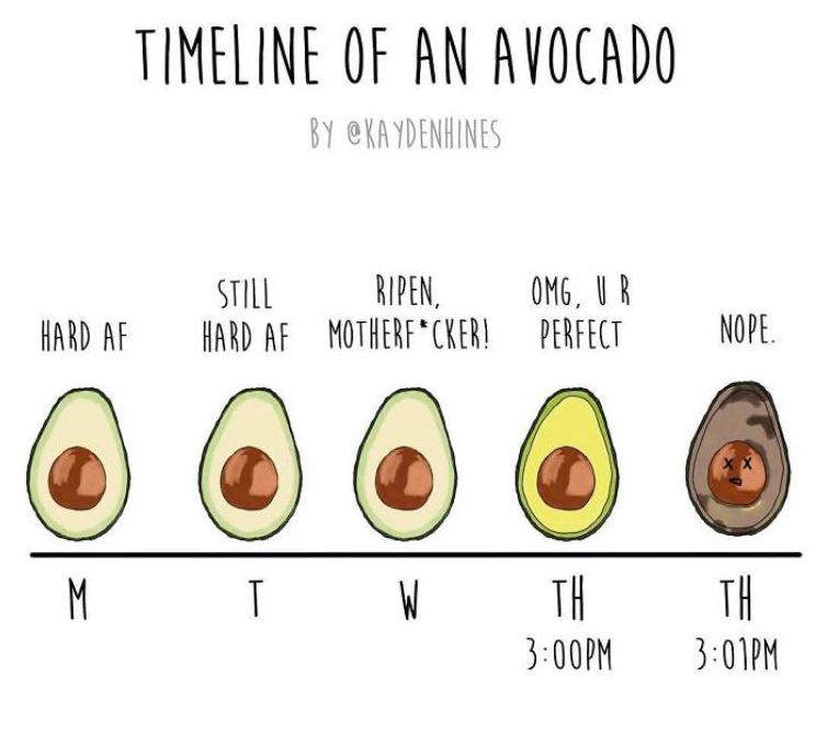 timeline of an avocado